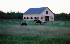 Horse_Barn3